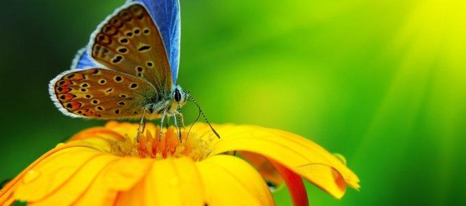 Интересные факты о бабочках