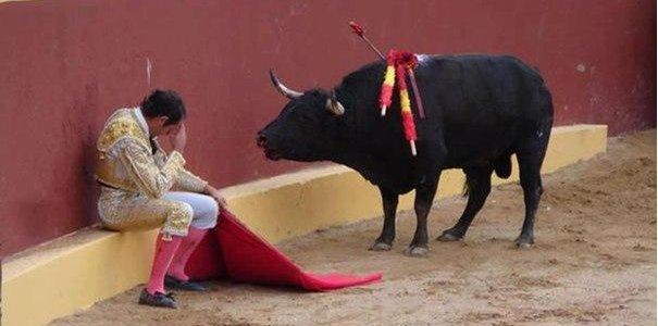 Конец карьеры матадора Альваро Мунеро