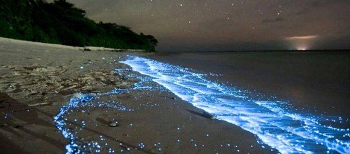 Природное явление «свечение моря»