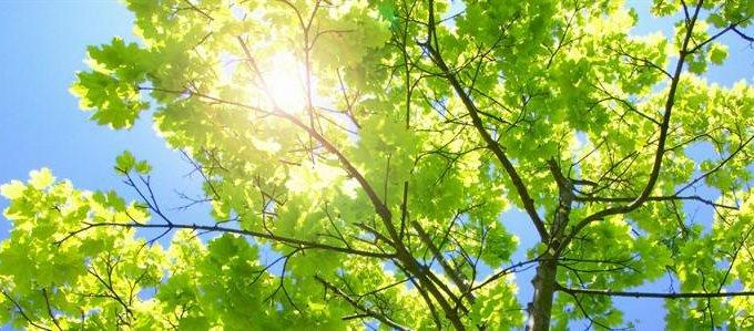 Деревья и растения в Библии