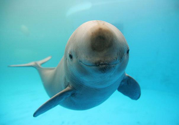 Умеют ли животные улыбаться