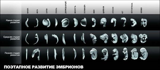 17 свидетельств против эволюции