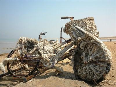 Необычные факты о Мертвом море