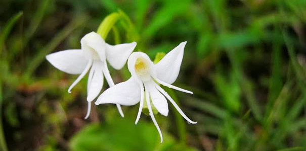 Самые невероятные в мире цветы