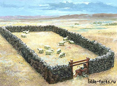 Интересная жизнь пастухов