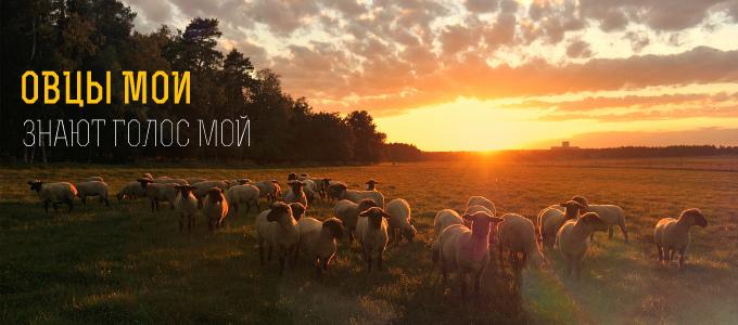 Овцы мои знают голос мой