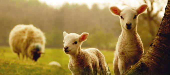 Глазами пастыря - интересные факты