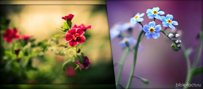 Самые интересные факты о цветах