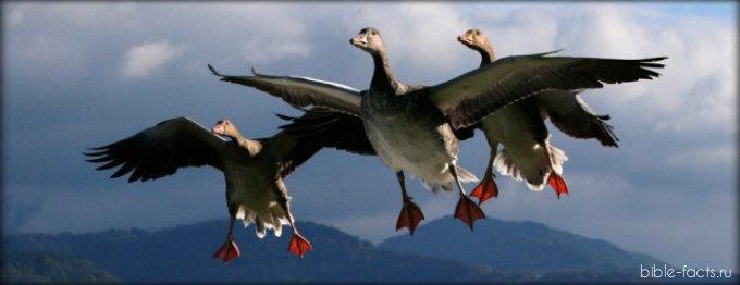Пророк Иеремия о сезонной миграции птиц