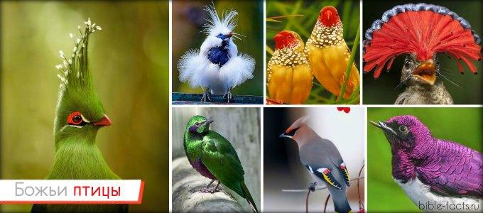 Поразительная красота Божьей фауны