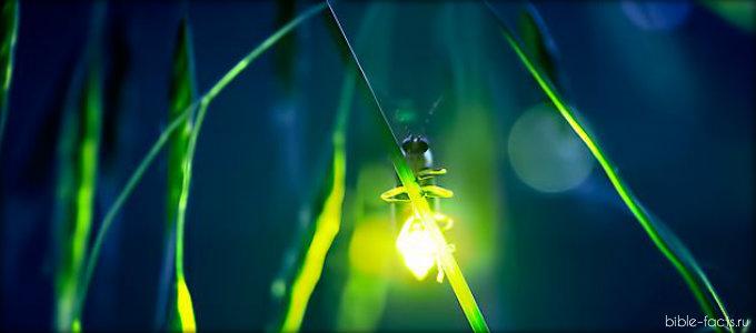 Необычные фотографии светлячков