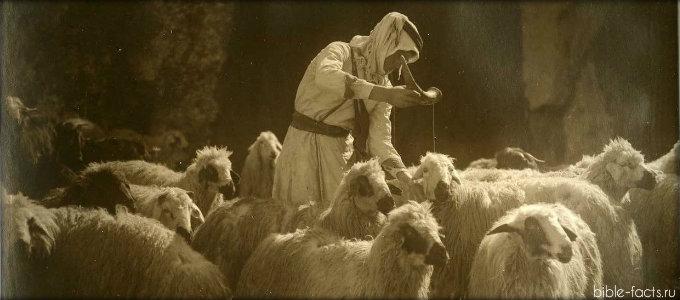 Глазами пастыря  2 часть