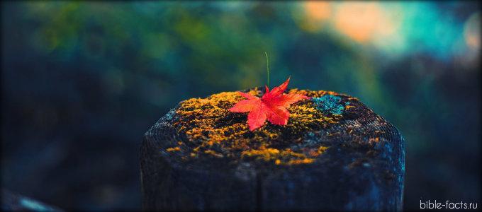 Потрясающая красота Божьей осени
