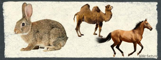 Разница между чистыми и нечистыми животными