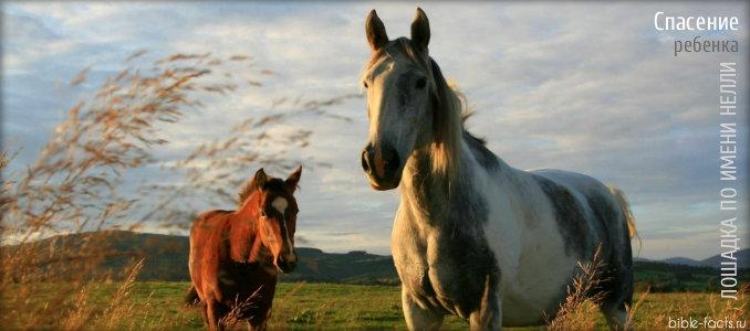 Лошадь помогла найти ребенка