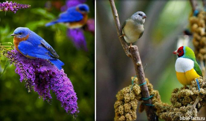 Птицы Божественной красоты