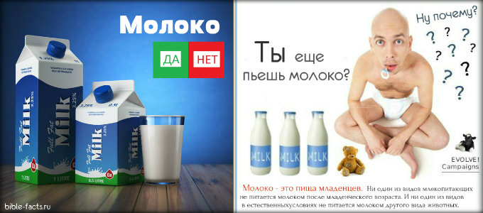 Видео как пьют из сиси молоко россия