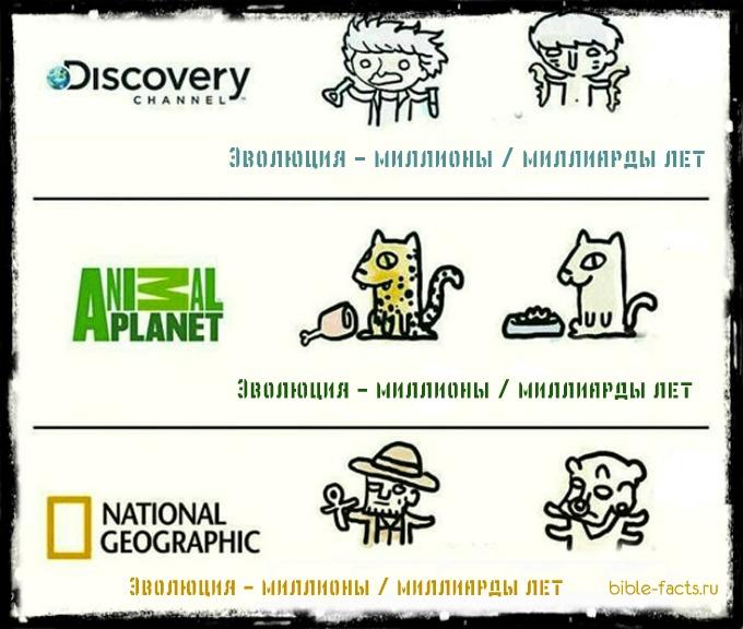 Забавные факты о теории Дарвина
