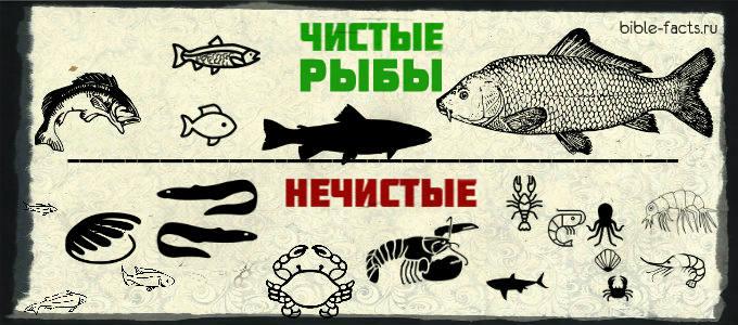 Рыбу, которую опасно есть (список)