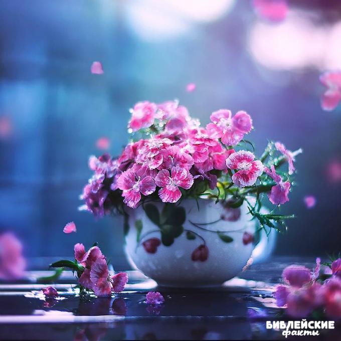Цветы Божественной красоты