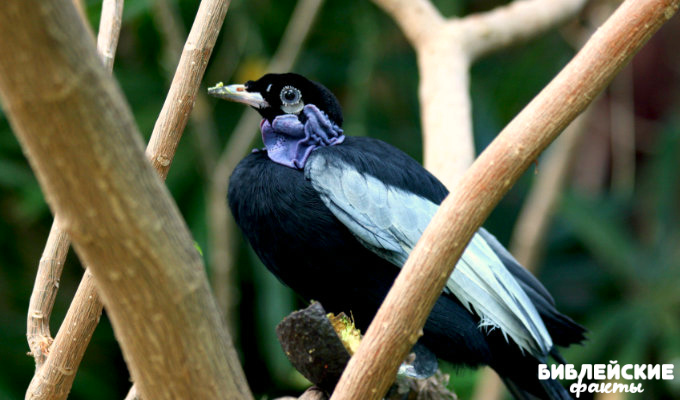 Птицы невероятной красоты. 3 часть