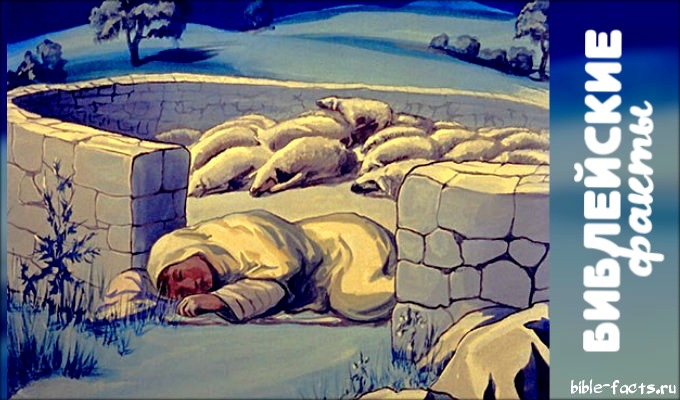 Вся правда об овцах: новые факты