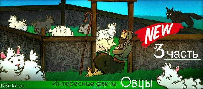 Новые интересные факты об овцах - 3 часть