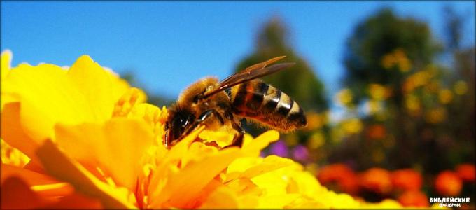 Удивительная пчела