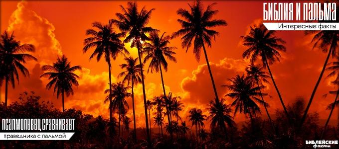 Библия и пальма