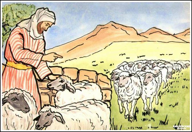 Интересные факты о пастухах