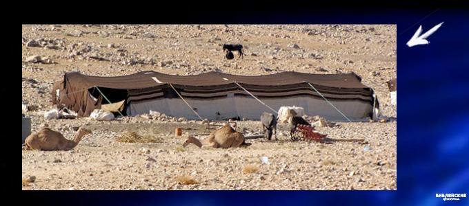 Бедуины пустыни Негев