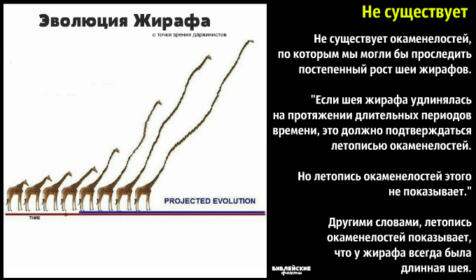 Шея жирафа: символ сотворения