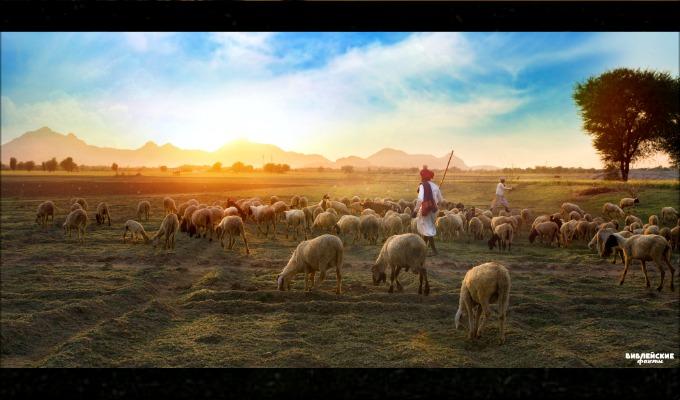 Интересные факты об овцах - 4 часть