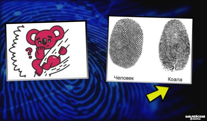 Интересные факты об отпечатках пальцев