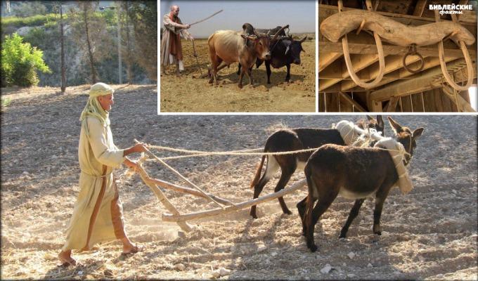 Труд земледельца в библейские времена