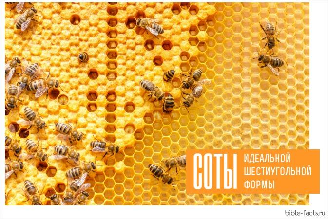 Удивительные Божьи пчелы