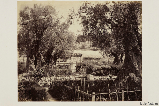 Гефсиманский сад - интересные факты