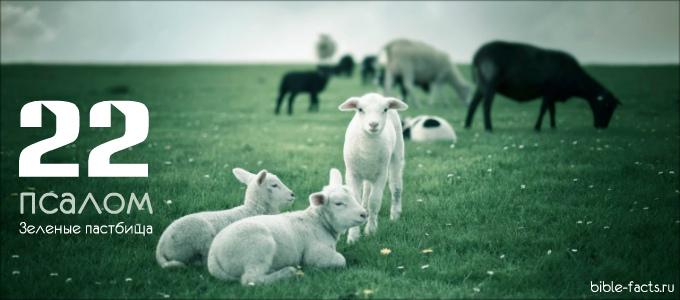 Как выглядят злачные пастбища из 22 псалма?