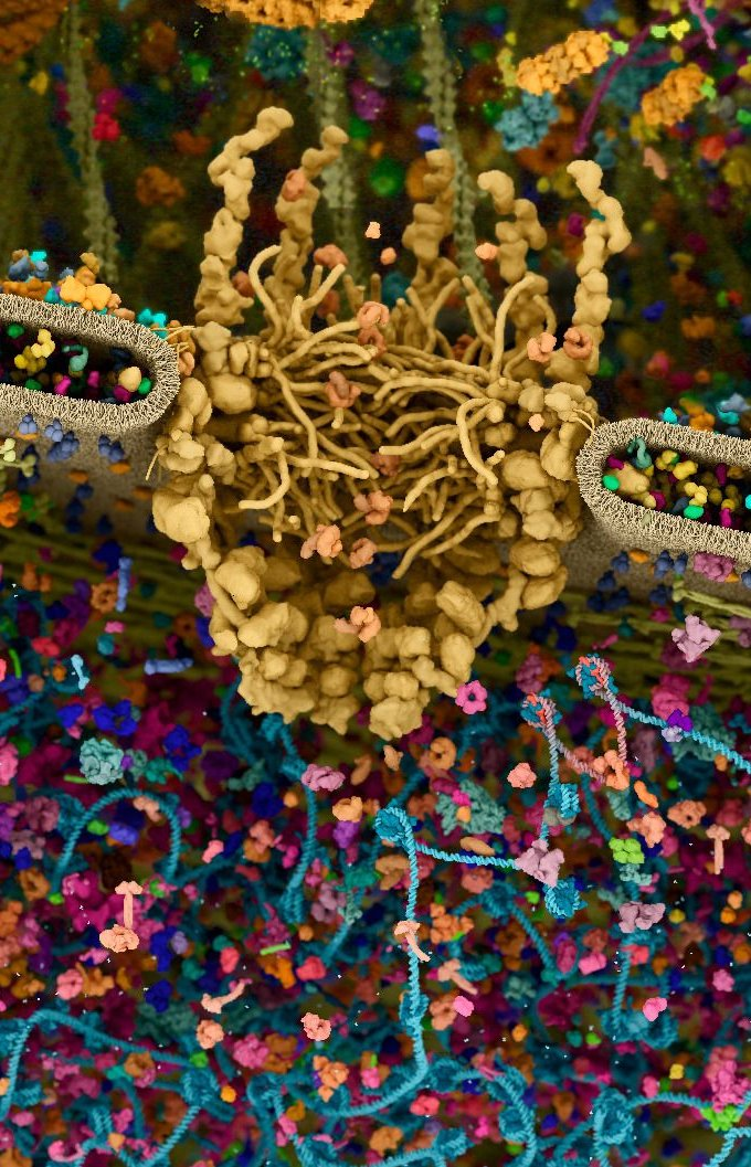 Детализированная 3D модель человеческой клетки - удивительное строение