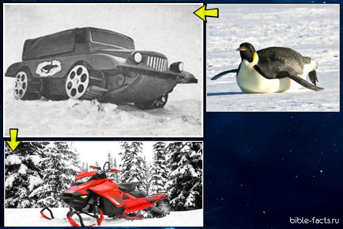 Какие изобретения человек подсмотрел у природы?
