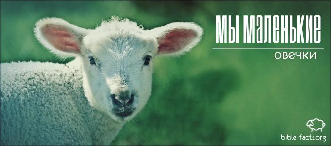 Мы маленькие овечки