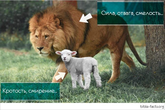 Иисус лев и агнец - интересные факты