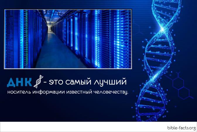 Интересные факты о ДНК, которые вас удивят