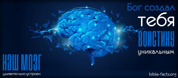 Наш мозг удивительно устроен