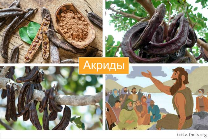 Чем питался Иоанн Креститель в пустыне - акриды